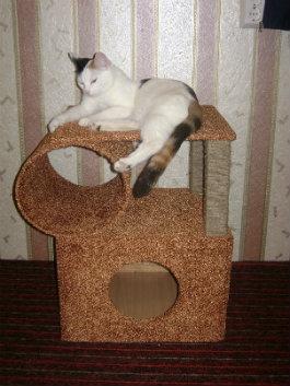 Как сделать уголок своей кошке 210